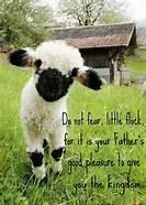 Little Lamb Luke