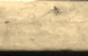 Ant (296x190)