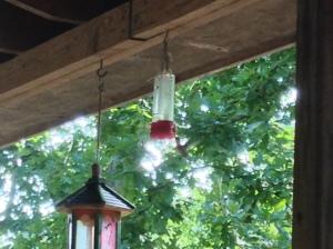 Hummingbird vs. Hornet